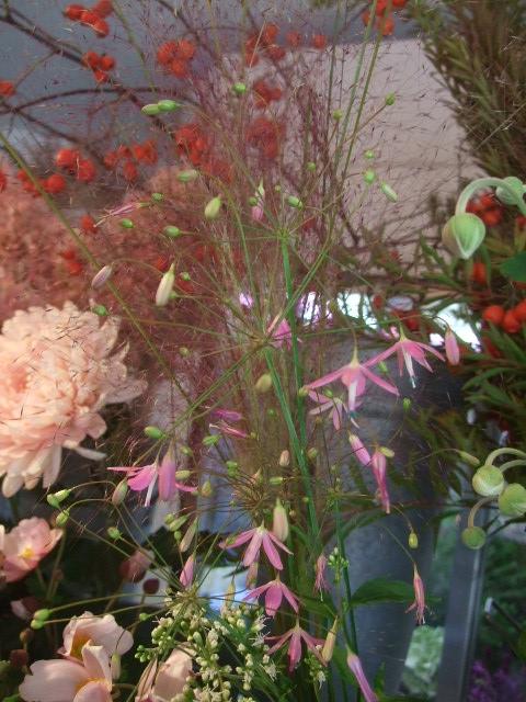 オークリーフ(秋の花)_f0049672_16464864.jpg