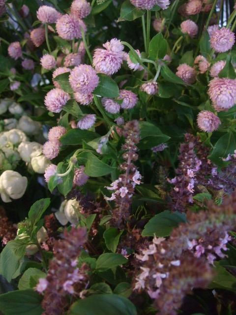 オークリーフ(秋の花)_f0049672_16465534.jpg