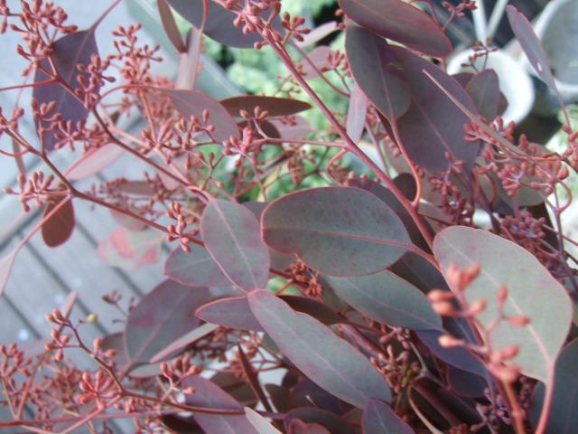 オークリーフ(秋の花)_f0049672_16471038.jpg