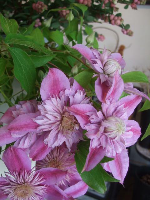 オークリーフ(秋の花)_f0049672_16473469.jpg