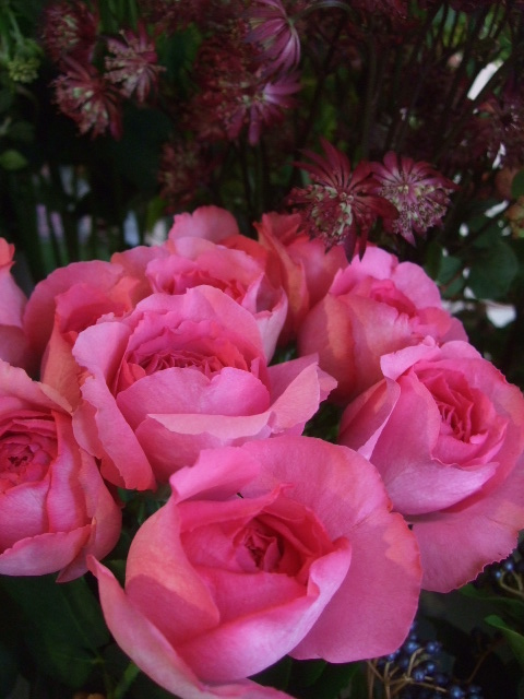 オークリーフ(秋の花)_f0049672_16473758.jpg