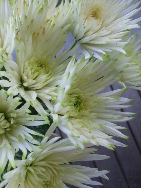 オークリーフ(秋の花)_f0049672_16475391.jpg