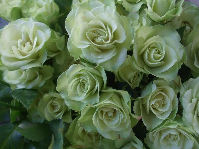 オークリーフ(秋の花)_f0049672_16475618.jpg