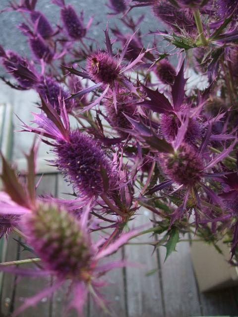 オークリーフ(秋の花)_f0049672_16524823.jpg