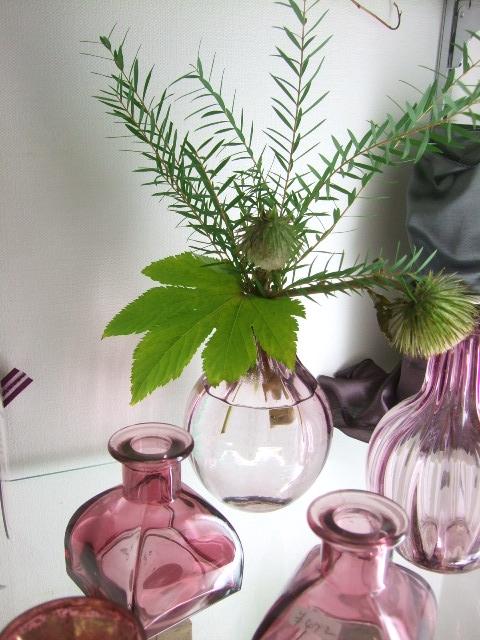 オークリーフ(秋の花)_f0049672_16543991.jpg