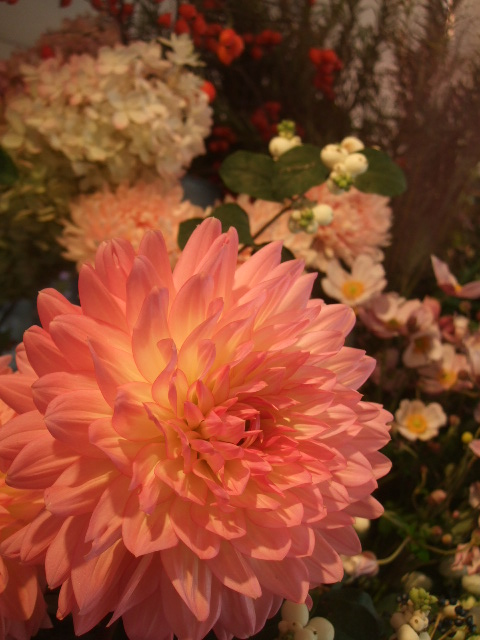 オークリーフ(秋の花)_f0049672_16562443.jpg