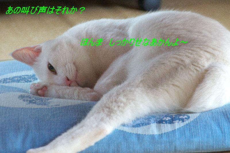 f0197682_22135491.jpg