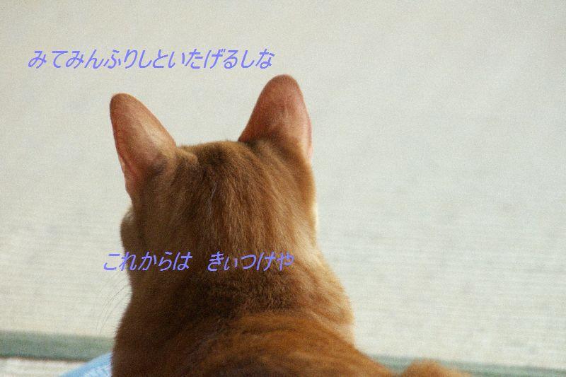 f0197682_2215565.jpg
