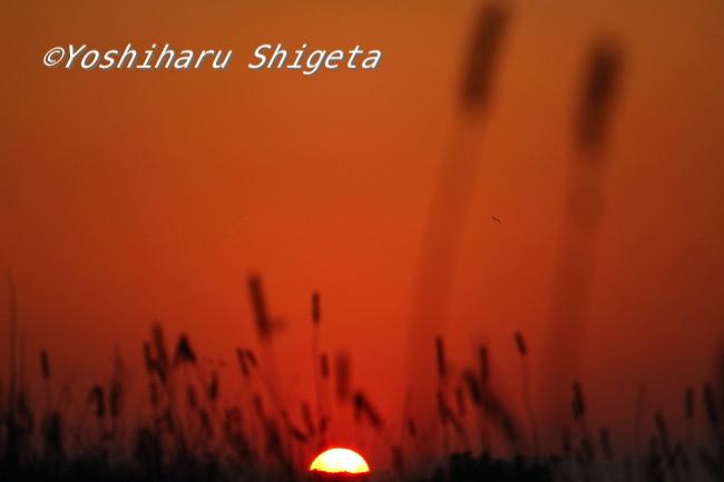 〜心に太陽〜_c0152400_633514.jpg