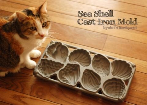 貝殻のケーキモールド_b0253205_29144.jpg