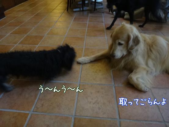 大型犬に慣れてもらうためのゲーム_f0064906_15562249.jpg