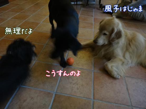 大型犬に慣れてもらうためのゲーム_f0064906_15565931.jpg