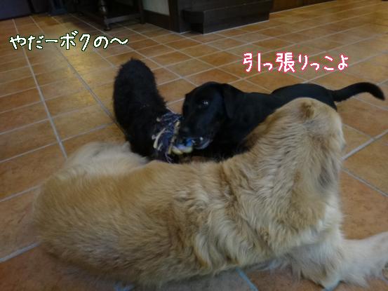 大型犬に慣れてもらうためのゲーム_f0064906_15583836.jpg
