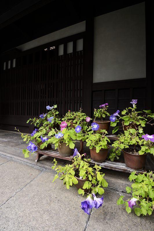 第11回 伝統文化祭 西陣千両ヶ辻 其の二_f0032011_18363227.jpg