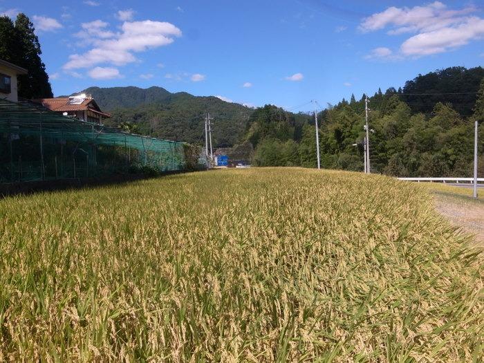 田んぼの風景と稲刈り準備_c0116915_2346286.jpg