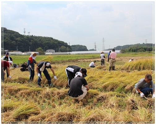 稲刈り初体験!_c0141025_171956.jpg