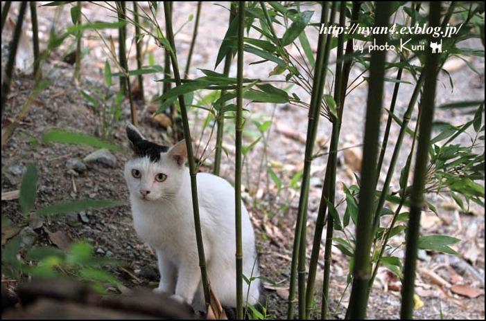 今日の外猫さん_f0166234_1113515.jpg