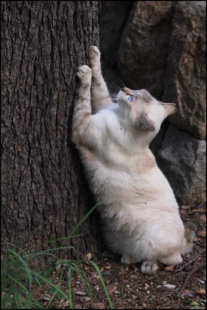 今日の外猫さん_f0166234_1191813.jpg