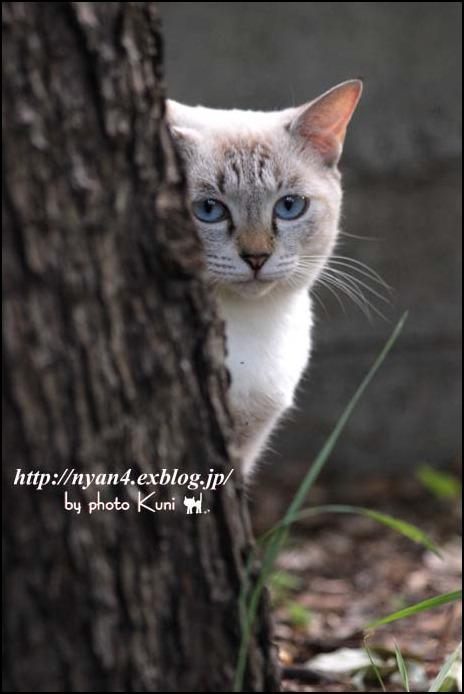 今日の外猫さん_f0166234_1225330.jpg