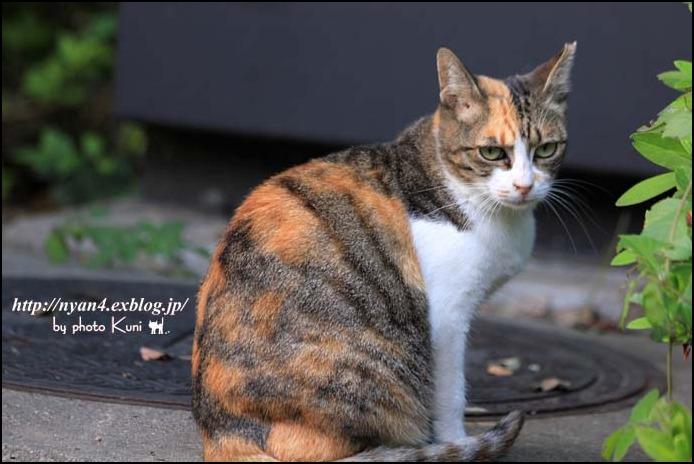 今日の外猫さん_f0166234_1235420.jpg