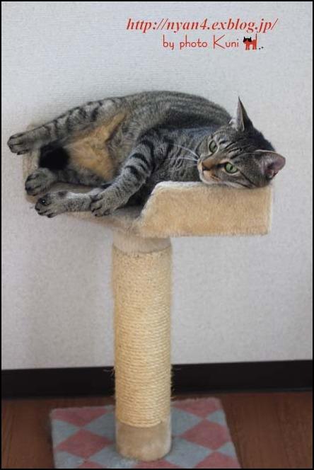 今日の外猫さん_f0166234_1324994.jpg