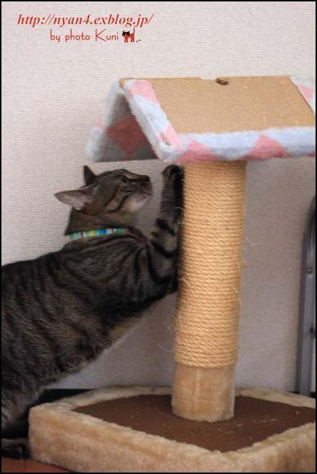 今日の外猫さん_f0166234_1334243.jpg