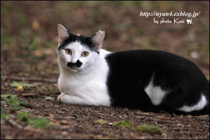 今日の外猫さん_f0166234_141558.jpg