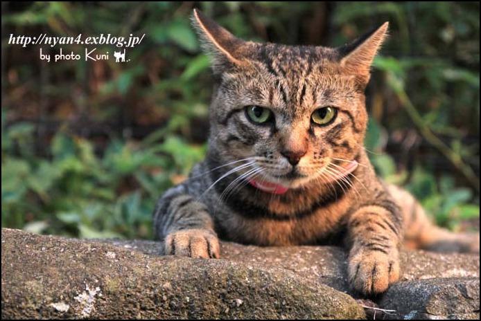 今日の外猫さん_f0166234_142799.jpg