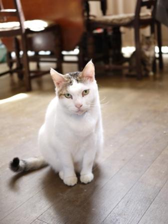 猫のお友だち ハナちゃんガブくんハルちゃんグレイくん編。_a0143140_23562445.jpg