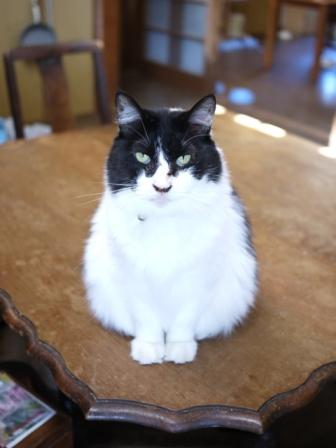猫のお友だち ハナちゃんガブくんハルちゃんグレイくん編。_a0143140_23565762.jpg