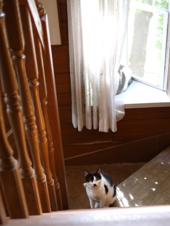 猫のお友だち ハナちゃんガブくんハルちゃんグレイくん編。_a0143140_23581236.jpg