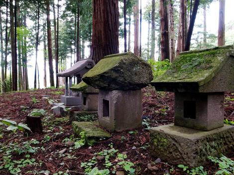 2013年9月『奥信州 幻のキノコ旅』【4】_e0071652_1255724.jpg