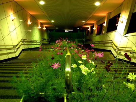 2013年9月『奥信州 幻のキノコ旅』【4】_e0071652_126156.jpg
