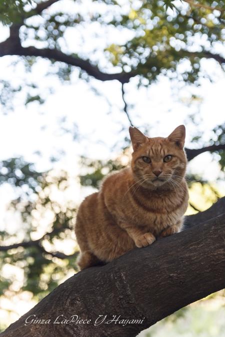 猫のいる風景 日比谷公園の茶トラちゃん_b0133053_0335361.jpg