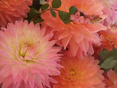 オークリーフ(ダリアのスタンド花)_f0049672_122935.jpg