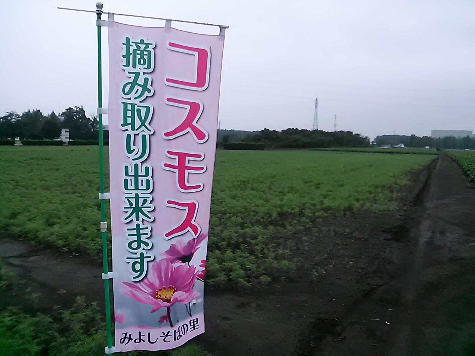コスモス畑_d0152192_172674.jpg