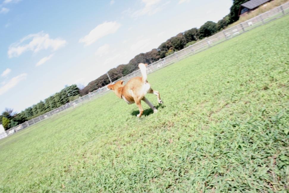 爽快!快走!(空海)_f0242002_1795218.jpg