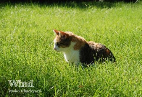 猫と風。オットの理系的考察(?)。_b0253205_035114.jpg