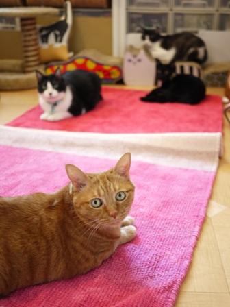 魔法のじゅうたん猫 空しぇるらぃらぎゃぉすてぃぁらみるきぃ編。_a0143140_14445391.jpg