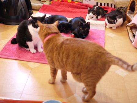 魔法のじゅうたん猫 空しぇるらぃらぎゃぉすてぃぁらみるきぃ編。_a0143140_1448189.jpg