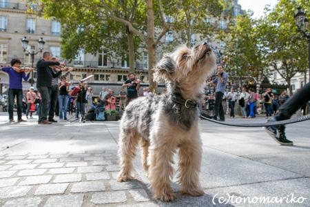 パリの大道芸人_c0024345_69115.jpg