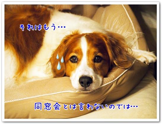 d0013149_22471598.jpg