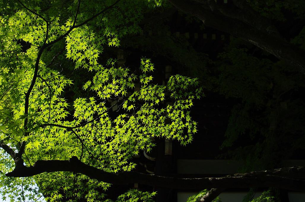 今年の紅葉はどうかな〜_f0152550_12324590.jpg