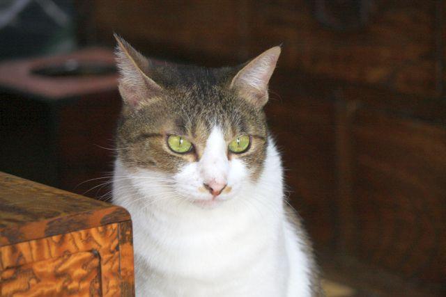 幻の看板猫_e0220163_1728949.jpg