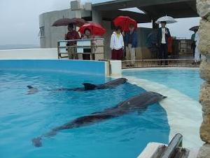 沖縄美ら海水族館_c0100865_142650100.jpg