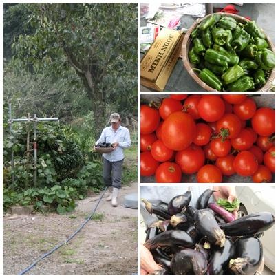 収穫と種まき!!_a0199979_17571328.jpg