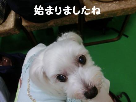 b0193480_17121236.jpg