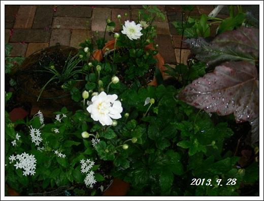 b0096584_2012029.jpg