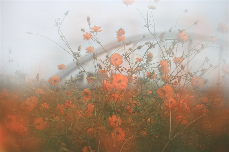 茨城の秋へ_e0305388_8533862.jpg