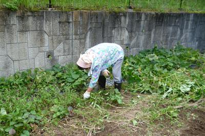 9/27農園作業!_a0154110_1145537.jpg